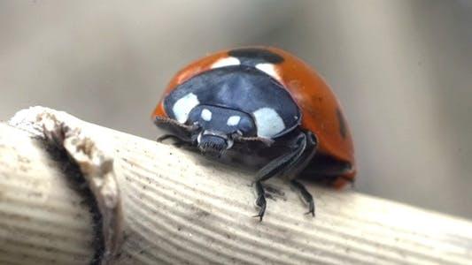 Ladybird Ladybug Bug 3