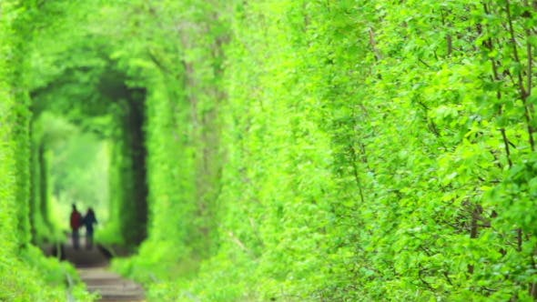 Thumbnail for Tunnel of Love in Ukraine