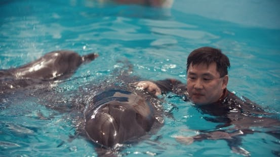 Thumbnail for Man Swim With Dolphin