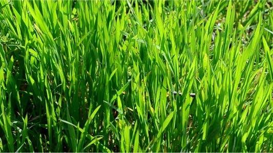 Thumbnail for Grass 16