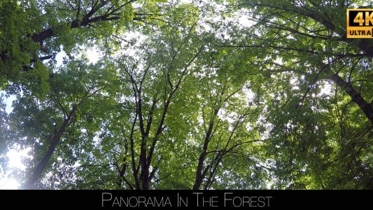Cover Image for Panorama In The Forest