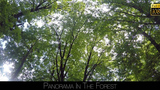 Thumbnail for Panorama In The Forest