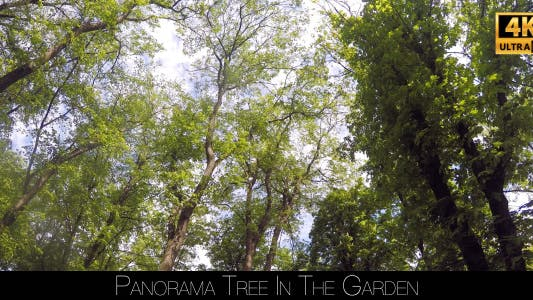 Thumbnail for Panorama In The Forest 2