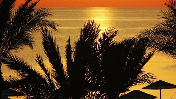 Thumbnail for Landscape With Palms And Sea During Sunrise