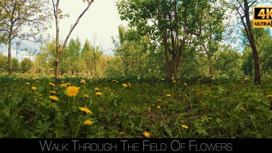 Thumbnail for Walk Through The Field Of Flowers
