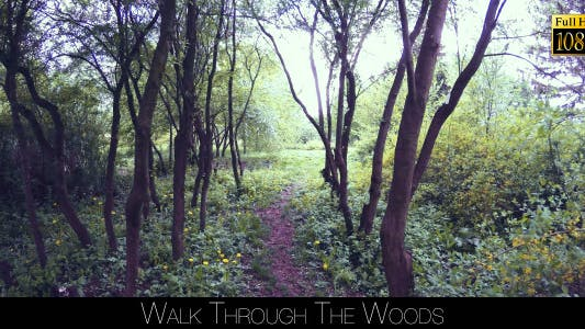 Thumbnail for Walk Through The Woods