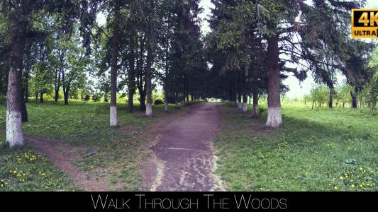 Thumbnail for Walk Through The Woods 2