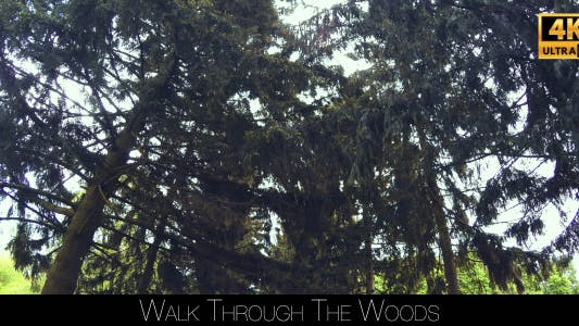 Thumbnail for Walk Through The Woods 5