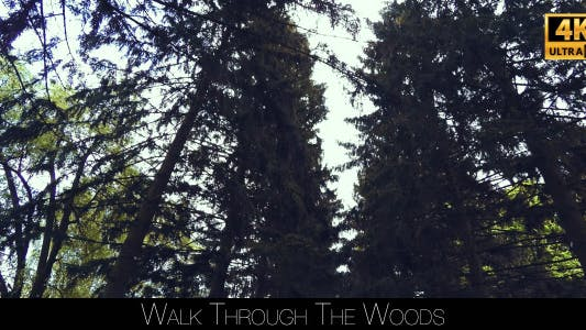 Thumbnail for Walk Through The Woods 6