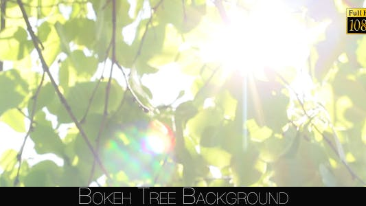Cover Image for Bokeh Tree Background 13