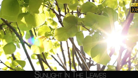 Thumbnail for Sunlight In The Leaves