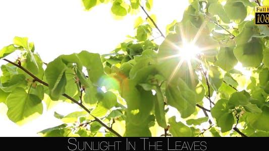 Thumbnail for Sunlight In The Leaves 2