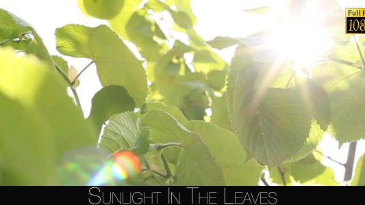 Sunlight In The Leaves 3
