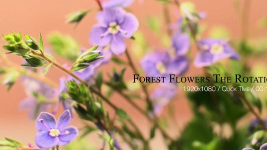 Thumbnail for Forest Flowers The Rotation 6