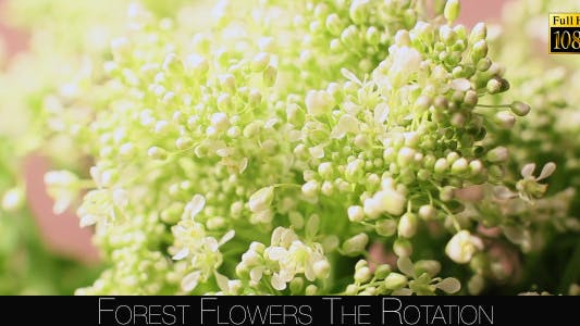 Cover Image for Forest Flowers The Rotation 7