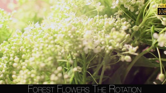 Cover Image for Forest Flowers The Rotation 8