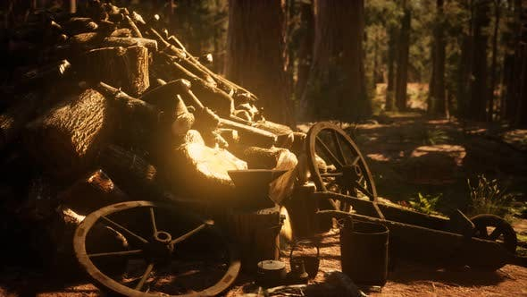Thumbnail for Preparation of Firewood for the Winter in Forest at Sunset