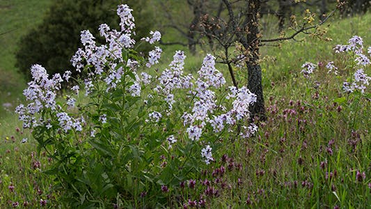 Mountain Wildflowers in Spring time