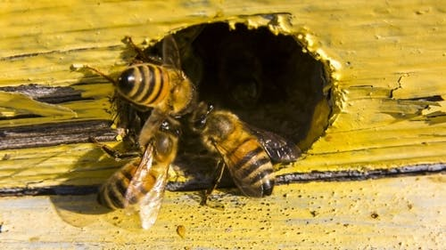 Bees Extrude Alien Out Of Hive