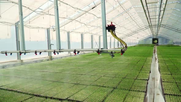 Thumbnail for Industrial Agriculture. Rows of Plants Growing Inside Big Industrial Greenhouse