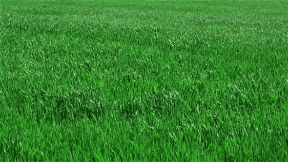 Thumbnail for Green Grass On Field