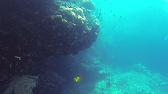 Thumbnail for Coral Reef Snorkling n Philippines
