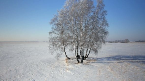 Thumbnail for Trees With Snow In Winter Rural Park