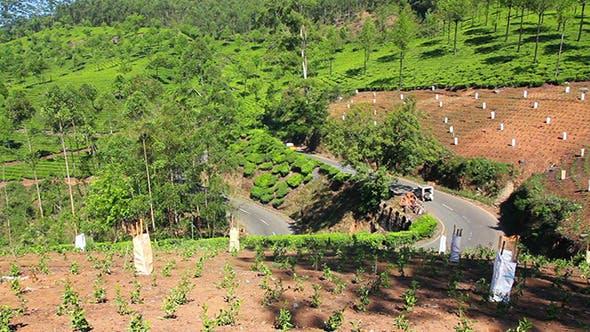 Thumbnail for Road Between Tea Plantations In Munnar Kerala