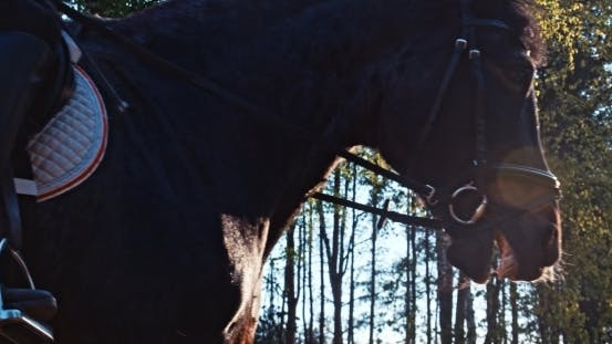 Thumbnail for Girl Riding a Horse