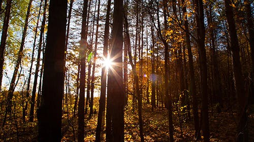 Beautiful Autumn Forest With Sun Shining