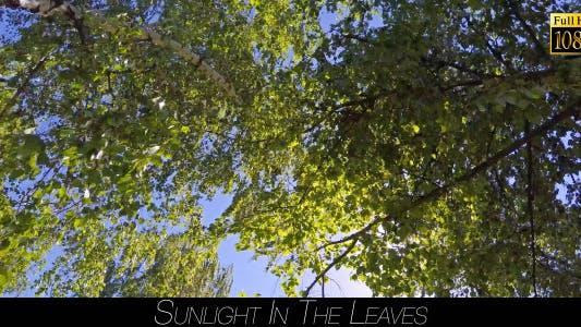 Thumbnail for Sunlight In The Leaves 7