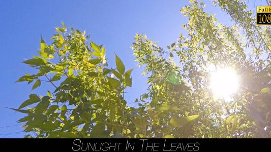 Thumbnail for Sunlight In The Leaves 8