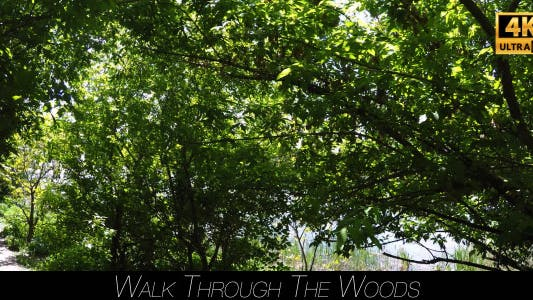 Thumbnail for Walk Through The Woods 8