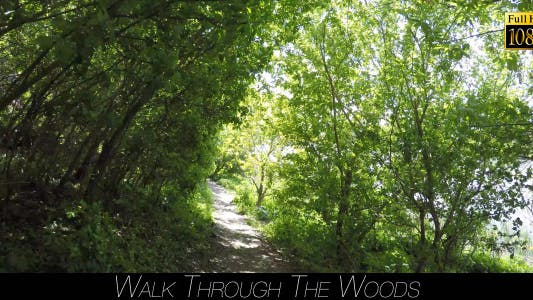 Thumbnail for Walk Through The Woods 13