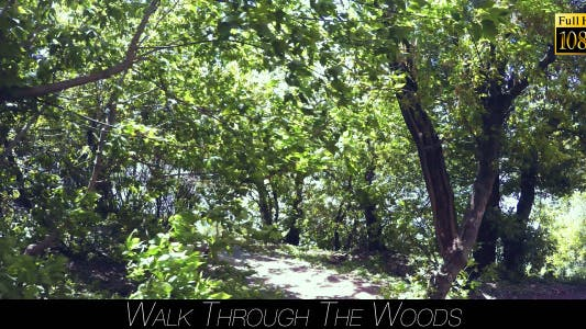 Thumbnail for Walk Through The Woods 14