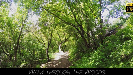 Thumbnail for Walk Through The Woods 15