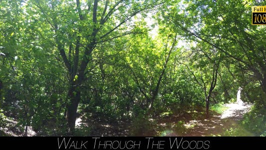 Thumbnail for Walk Through The Woods 16