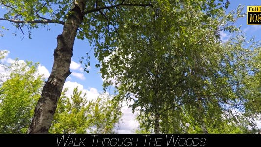 Thumbnail for Walk Through The Woods 18