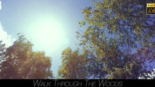 Thumbnail for Walk Through The Woods 19