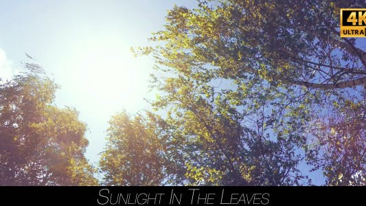Thumbnail for Sunlight In The Leaves 5