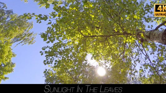 Thumbnail for Sunlight In The Leaves 6
