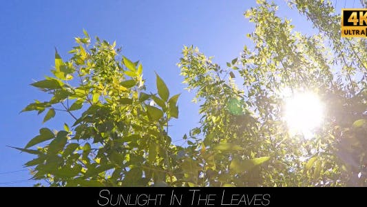 Cover Image for Sunlight In The Leaves 8