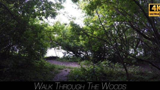 Thumbnail for Walk Through The Woods 9
