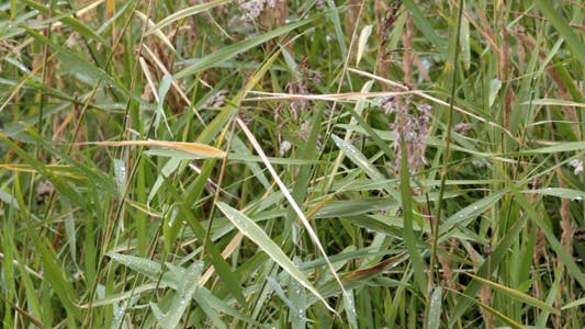 Thumbnail for Grass in the field