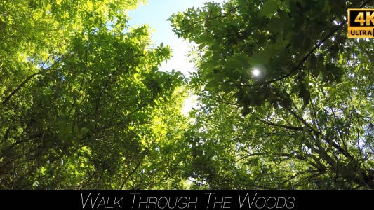 Thumbnail for Walk Through The Woods 10