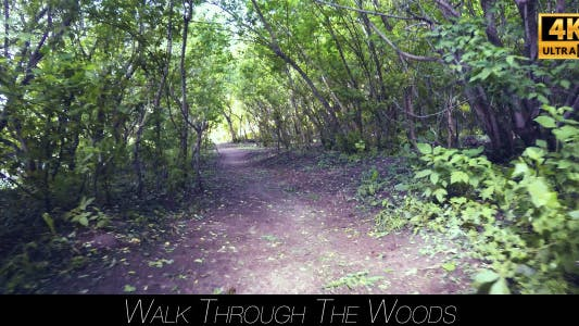 Thumbnail for Walk Through The Woods 11