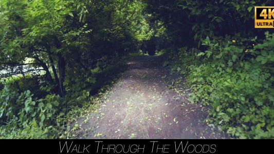 Thumbnail for Walk Through The Woods 12
