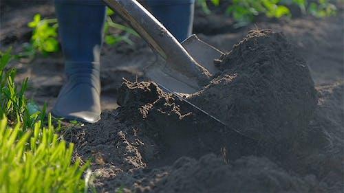 Graben mit Schaufel im Garten