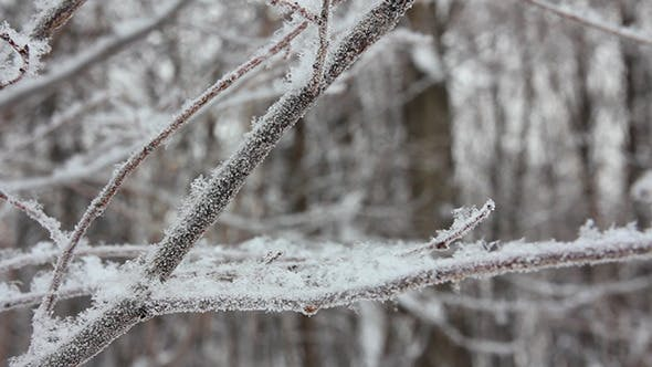 Thumbnail for Winter Tree Branch And Snow