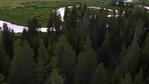 Thumbnail for Flying over pine tree forest